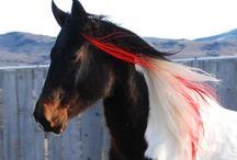 Horses / by Claudia Dean