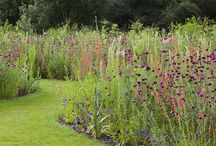 Perennial borders / Examples of beautifully planted borders