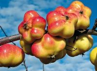 fruit trees and shrubs