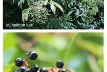 Früchte und Kräuter