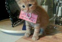 cute / all beautifull and cute animals