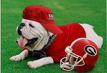 Georgia Bulldogs / It's all about the DAWGS!  / by Life of a Southern Mom