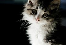 Cute Cats and Kittens / Animals