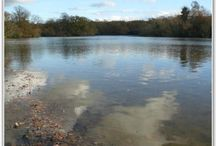 LONDON, UK. / Carp Fishing Lakes and Venues Situated in London, United Kingdom.