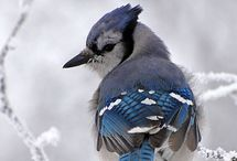ptáčkové
