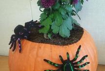 gourds, pumpkins and fall