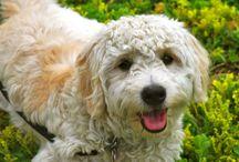 New puppy!  / by Latie Kent