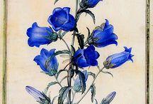 Blue / My favourite colour.