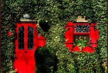 This Old Haus / my country home will look one of these ivy-covered homes