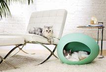 cats - home design