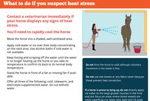 ~Heat Stress Awareness in Horses~ / Tips and Tricks on what to do if your horse has Heat Stress.