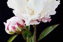Flowers for Ellen's June wedding / An Ardington House wedding.