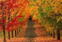 hátterek-ősz