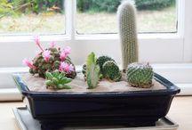 Cacti indoors garden
