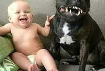 Dogs & Babies