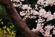 Honmoku