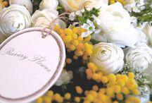Lys Gracieux Flowers