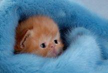Just toooo cute ;-)