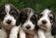 Puppies / cutest puppies on the planet