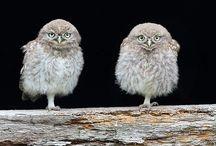 OWLcaholic