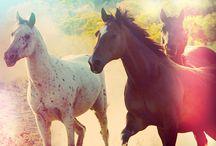 Güzel Hayvanlar / Hayvan fotoğrafları sevdiğim hayvanlar