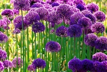purple and violet feeling