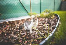 Cuccioli di gattini / Spettacolari gattini alla scoperta e conquista del mondo