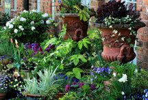 Container Garden Ideas / http://dabbiesgardenideas.com