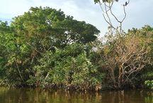 Amazônia: fotos por Patricia Grossi