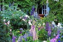 Flowers I love and garden