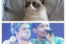 grumpy cat vs one direction