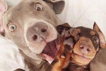 Selfies / #Selfies divertidas de algunos peludtios que no te puedes perder.  ¿y cuál es el la mejor selfie de tu #mascota?