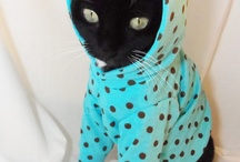 Crazy Cat Lady / by Marina Monsisvais