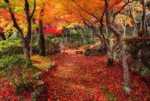 Kyoto Japán