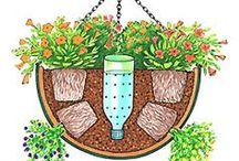 plant care ideas