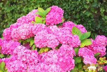 Garden of Flowers!
