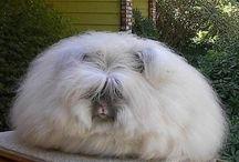 Fluffy fluff