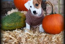 Jack Russell=Pure Love / by Nancy Carnahan