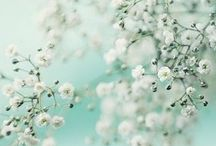 #flowers / by Lalie à sa guise