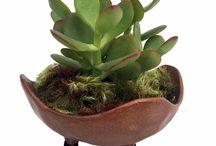 Volcano Bowl Planters / Volcano Bowl Planter with Live Plants