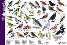 birds I've seen in the garden