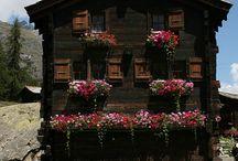 Power Flower in Alps / C'est l'été, bleu et chaud comme tous les beaux étés en montagne mais fleuri et gai comme les fleurs des alpages. C'est le moment de décorer votre chalet de mille fleurs qui animeront votre #déco #chalet et vous accompagneront jusqu'à l'automne. Mais chut...pour l'instant c'est le bruissement clair de l'été en montagne!
