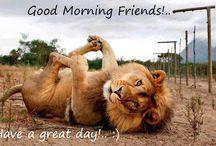 AA Good Morning