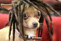 Dogs de peruca ♥