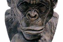 khỉ già