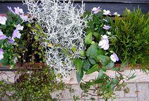 Tuin / Dingen voor mijn tuin, zoals plantenbakken.