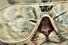 Catness.....lol