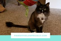 Pawsitive Life Project