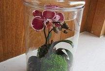 Flower Terrarium