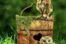 uilen plaatjes